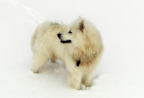 Ist ein Familienhund etwas für uns? 6 Dinge, die Du