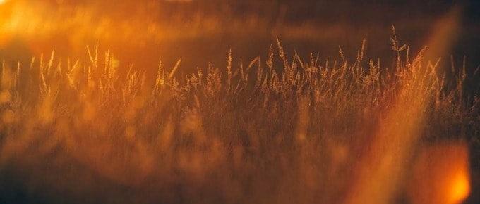 Im Sommer bei Hitze und Pollen trotzdem gut schlafen? Wir testen den Dyson Pure Cool Link #Werbung
